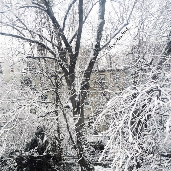 neve-giardino