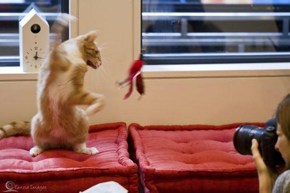 *Cat toy!-2
