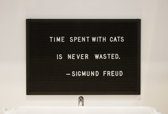*Time spent with cats-2