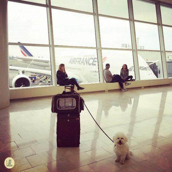 Guenda_aereoporto