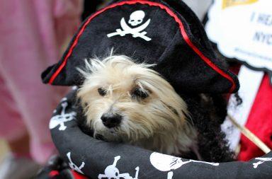 dog-halloween-parade